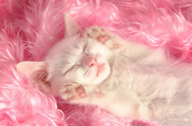 medium_cat-photo-white-and-pink-kitten-warmly-welcome-sleeping-miss-cat